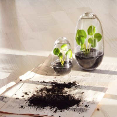 grow-greenhouse-clear-small